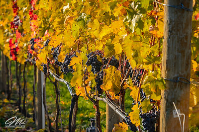 okanagan_fruits-135