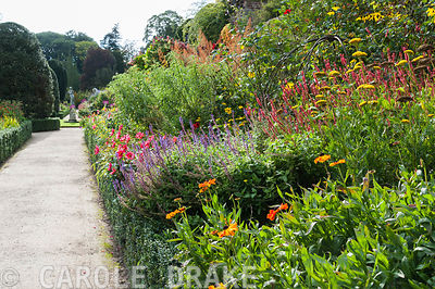 Borders on the lower terrace at Powis Castle garden full of brightly coloured herbaceous perennials including heleniums, pers...
