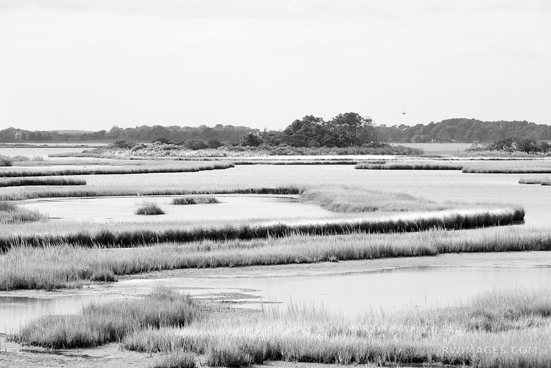 WETLANDS CHINCOTEAGUE BAY ASSATEAGUE ISLAND NATIONAL SEASHORE MARYLAND BLACK AND WHITE