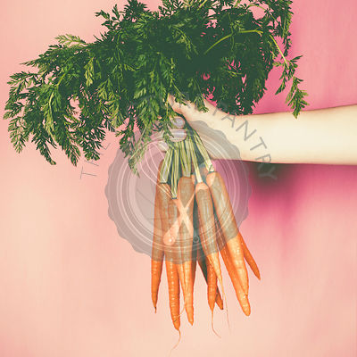 Bunch of fresh carrots in the hand