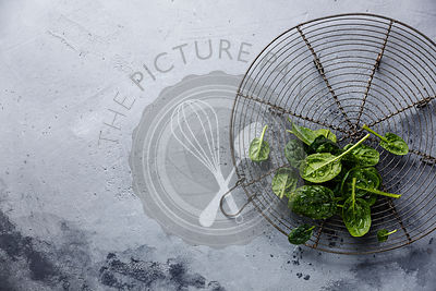 Raw fresh baby spinach on wire rack on gray concrete background copy space