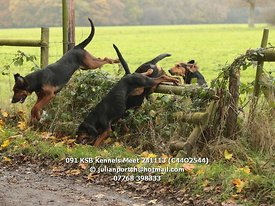 091_KSB_Kennels_Meet_241113_(C44O2544)