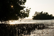 Mangroves along the beach at sunset, Toliara, Madagascar