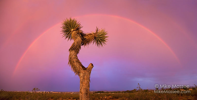 Joshua Tree and Rainbows, Mojave Desert