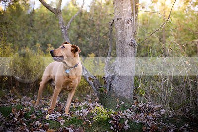 tan mixed breed dog looking away standing near tree