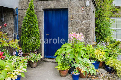 Blue front door surrounded by pots of hostas, lilies and clipped evergreens. The Bay Garden, Camolin, Co Wexford, Ireland