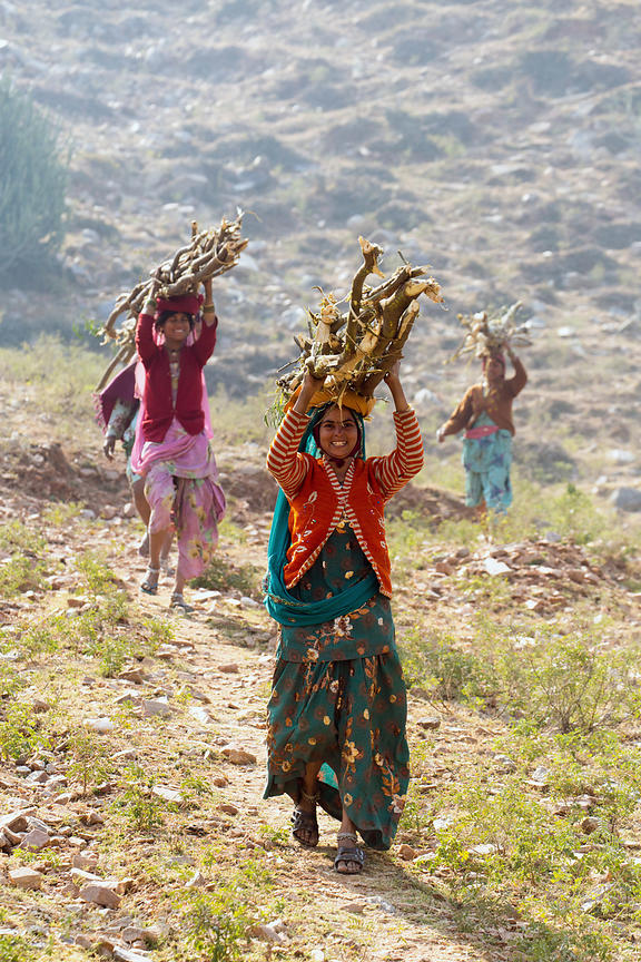 Women carry branches on their heads through the desert, Ajaypal, Rajasthan, India