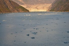 Sawyer Glacier icebergs and seals