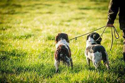 dogs_on_lead