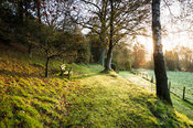 Rising sun illuminates a path to the woodland garden.