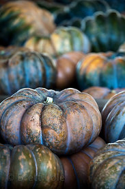 Pumpkins for sale at a wholesale market in Amish country, Lancaster, Pennsylvania