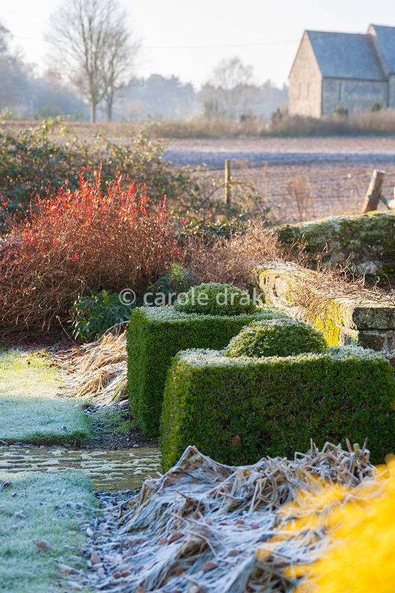 Clipped box stands each side of an opening in a low wall, with red berberis and frosty plants roundabout and fields and church beyond.