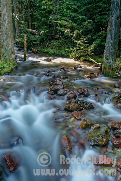 Jackson Creek Blur