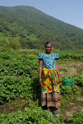 Woman at a potato field at the base of Mount Bisoke, Volcanoes National Park, Rwanda