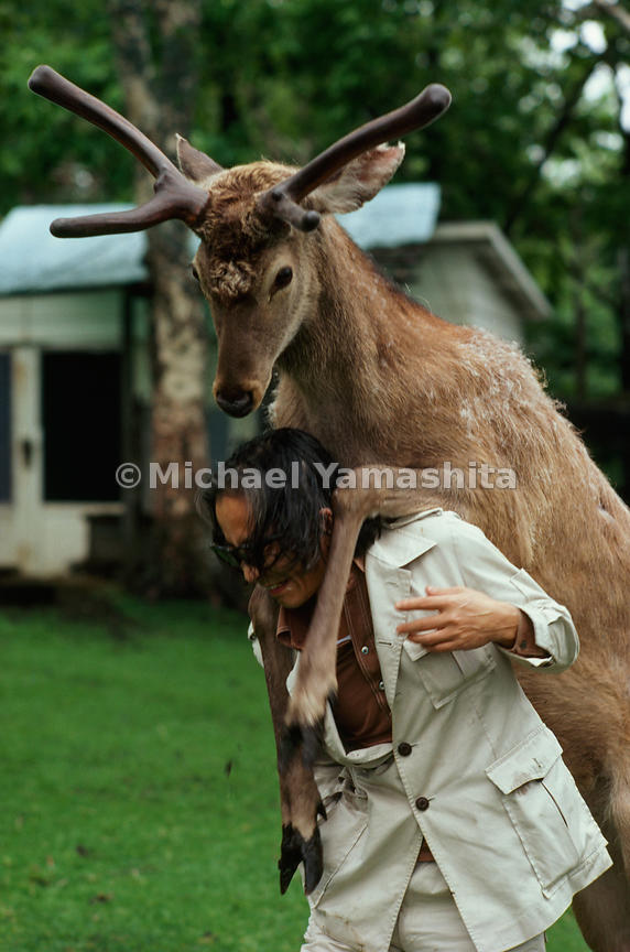 Body language expresses affection between Jack, a stag, and animal writer Masanori Hata, who raised the Ezo deer at his Anima...