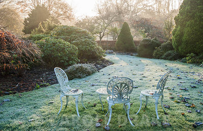 Frosty lawn surrounded by trees and shrubs. Chiffchaffs, Bourton, Dorset, UK