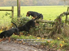 092_KSB_Kennels_Meet_241113_(C44O2545)