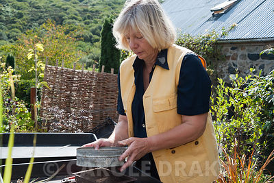 Christina Shand sowing freshly collected seed from primulas in the bog garden. Dyffryn Fernant, Fishguard, Pembrokeshire, Wales, UK