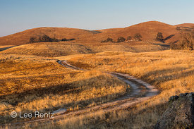 Road Winding through Golden California Hills with Oaks and Grasslands