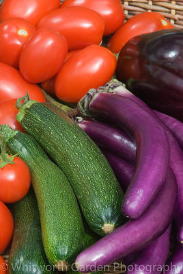 Basket of freshly picked vegetables - Aubergine 'Farmers Long' and 'Bonica', Courgettes, plum and round tomatoes. © Jo Whitworth