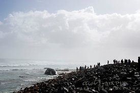 A group of people silhouetted on a rocky beach looking at a beached whale in the shallow surf, misty and cloudy in a blue sky