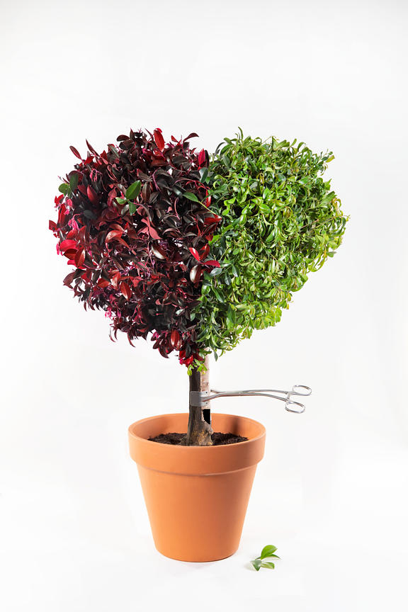 ACutting_topiary_heart_7734v51mrg