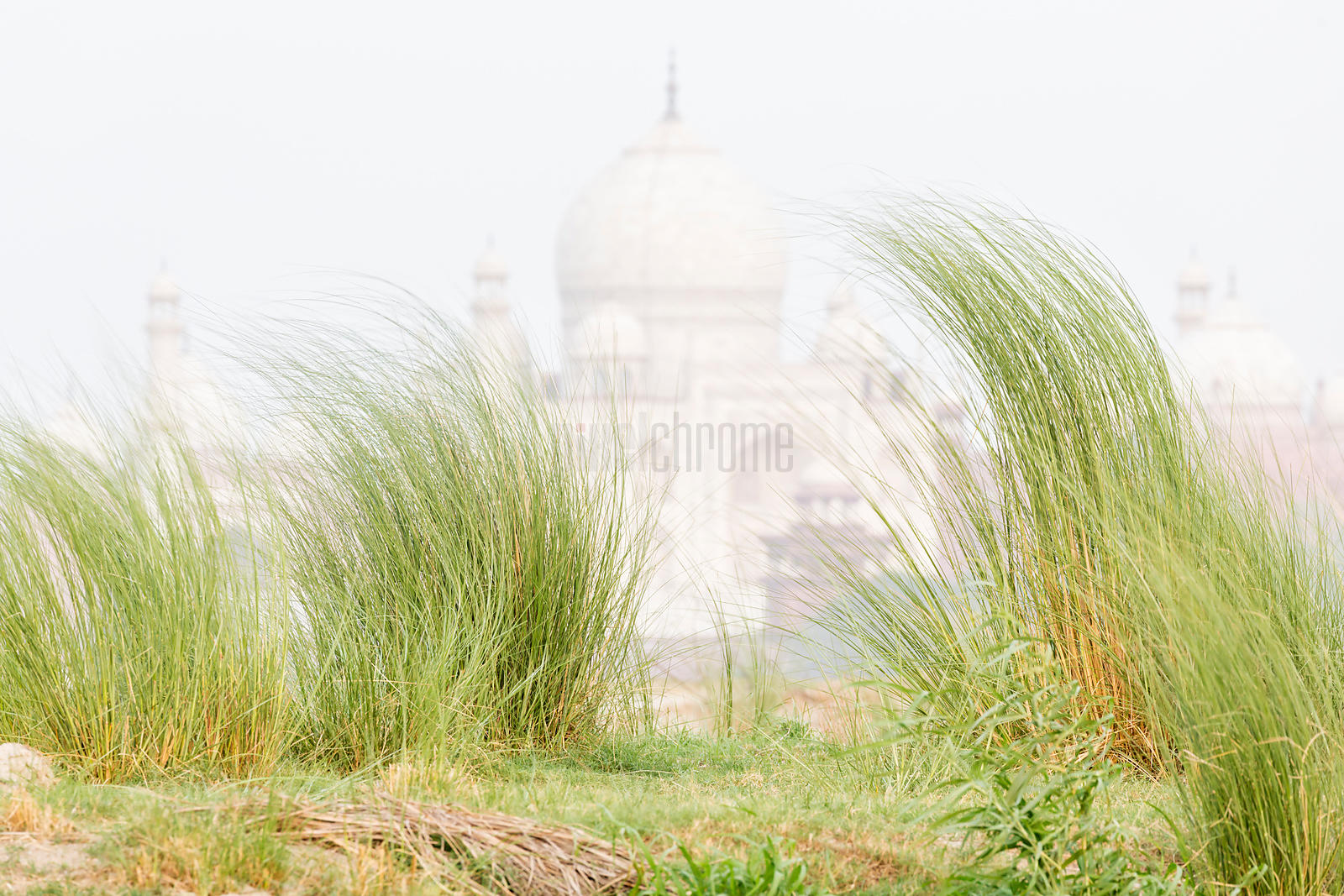 The Taj Mahal and Yamuna Floodplain Grasses