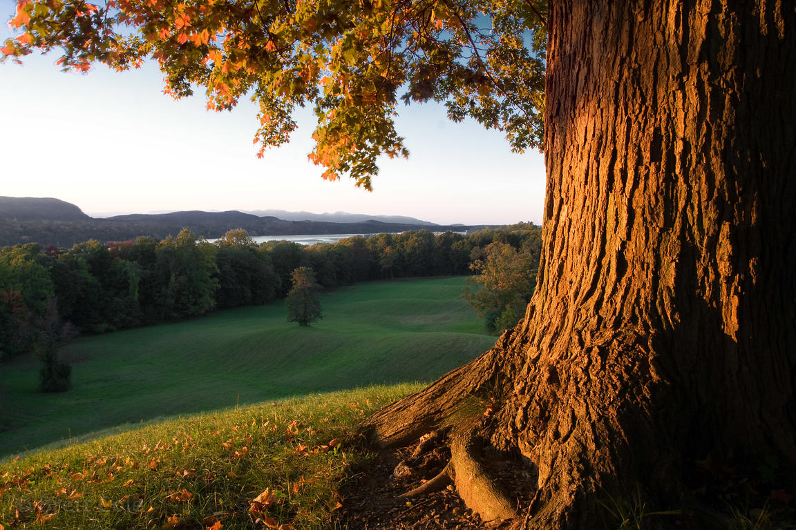 Late light on the rolling hills of the Vanderbilt estate, Hudson Valley, New York