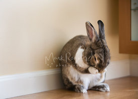 Bunny Rabbit Sitting Against Wall with Head in Paws