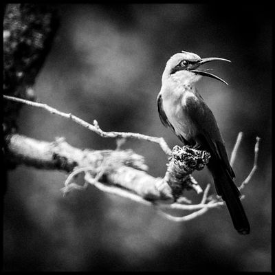 9138-Bird_Laurent_Baheux