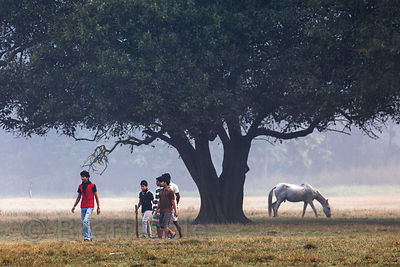 People walk beneath a large old tree on the Maidan (Central Park), Kolkata, India.
