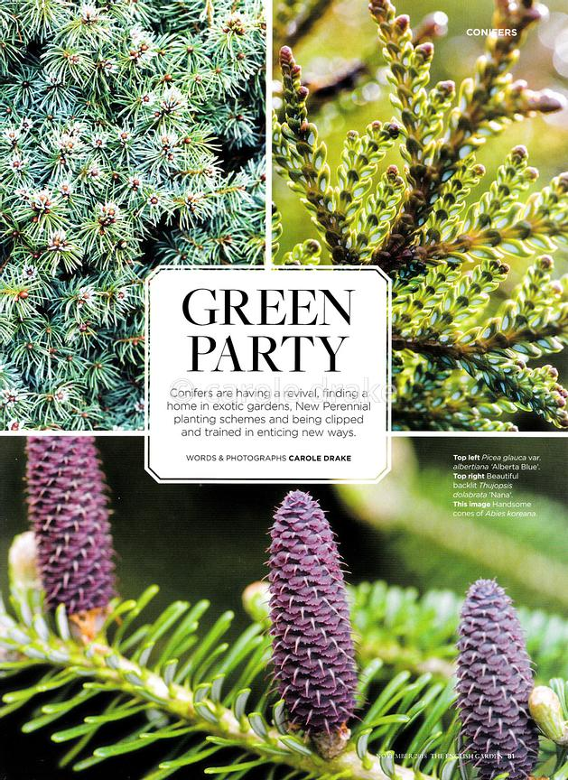 Green Party - New Ways with Conifers, The English Garden, November 2018