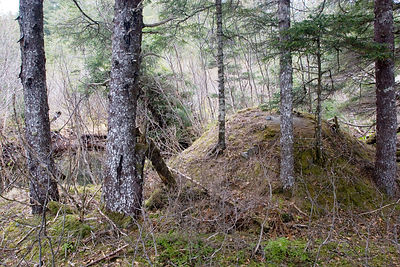 A mound of unknown origin in forest along the beach, Cape Yakitaga, Alaska