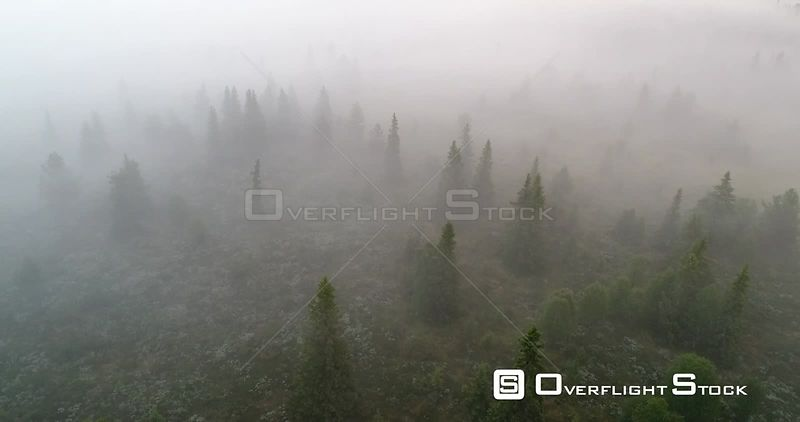 Aerial shot of a mountain forest shrouded in mist before sunrise, Golsfjellet, Buskerund, Norway, July 2017.