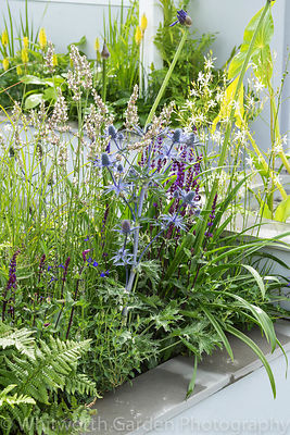 The Urban Rain Garden at the RHS Hampton Court Flower Show 2017. Designer: Rhiannon Williams. Sponsors: Landform Consultants,...