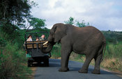 Tourists watching an elephant  cross the road, Hluhluwe-Imfolozi Game Reserve, KwaZulu-Natal, South Africa