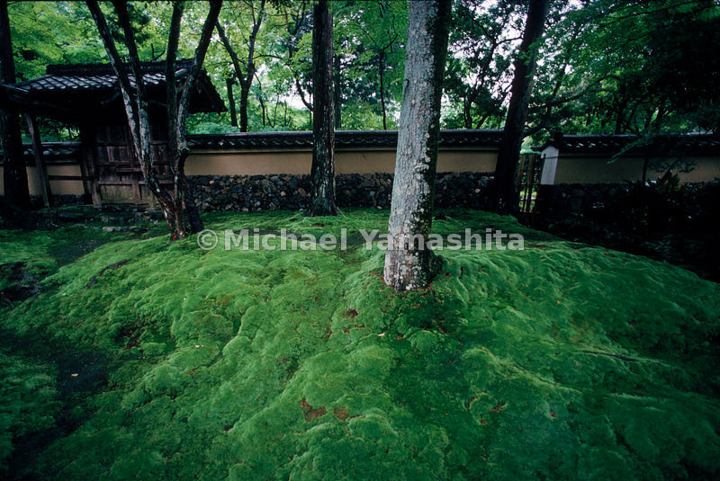 Japanese Garden- Moss seen at Saiho-ji, adds an aura of age to a garden