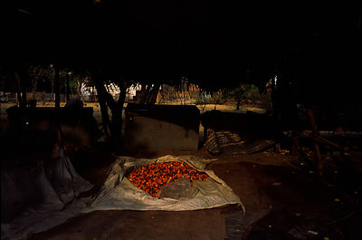 India - Delhi - Petals in the flower market, Mehrauli Flower market