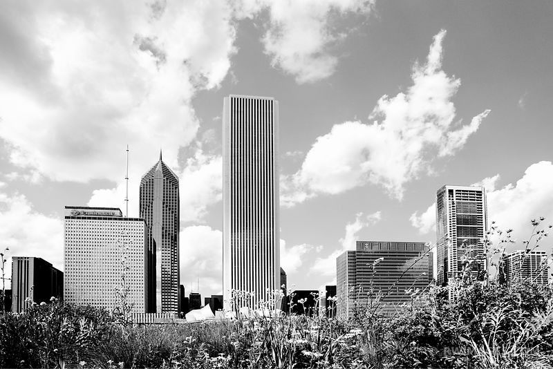 PRAIRIE LURIE GARDEN MILLENIUM PARK CHICAGO BLACK AND WHITE