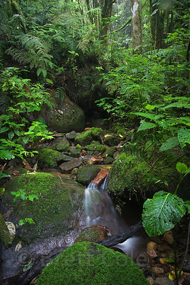 Classic rainforest creek scene deep in the Las Nubes Reserve, near San Isidro, Costa Rica.