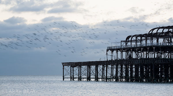Section of West Pier Brighton and starlings with soft grey sky and sea Brighton, East Sussex, UK