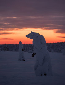 """Ice-bear"" at Hedmarksvidda"