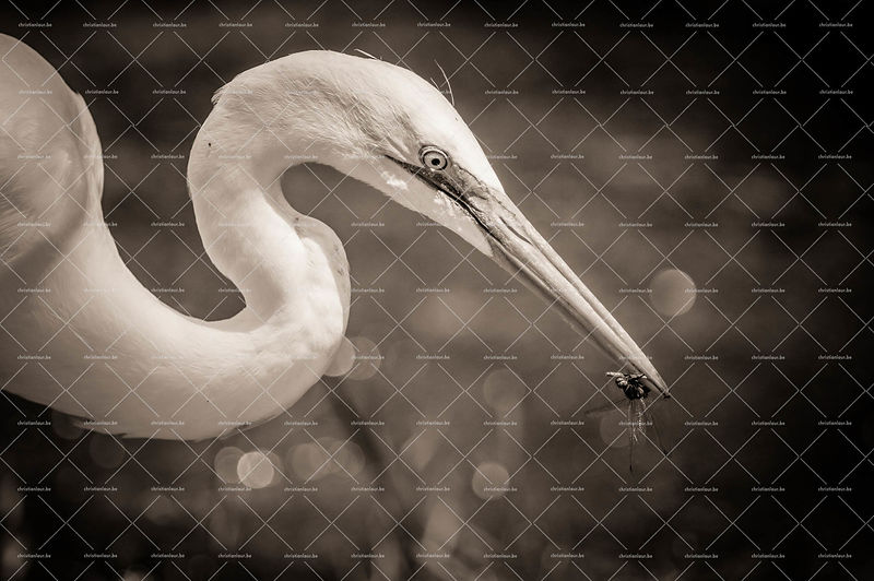 Wildlife_B&W