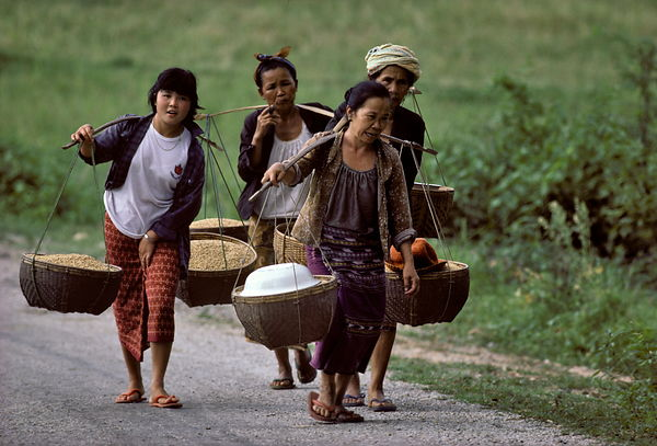 Carrying rice