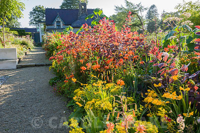 Hot beds full of vivid red, orange and yellow herbaceous perennials and shrubs including yellow Leontodon rigens, orange Lili...