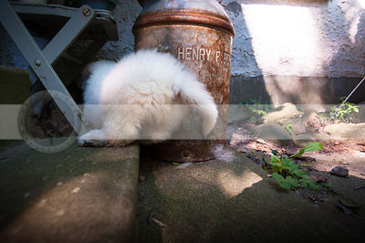 fluffy cute puppy dog butt from behind with antique barrel in yard