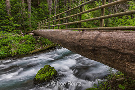 Rustic Log Bridge Crossing Dungeness River in Olympic National Forest