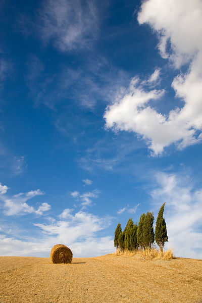 Tuscan landscape, hay bale, cypress tree