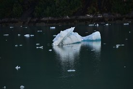 Another Sawyer Glacier iceberg