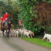 The Cottesmore Hunt at Little Dalby 7/2